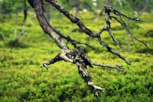 branch by fastidious-cat