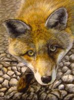 My fox, pastels by AngelaMaySmith