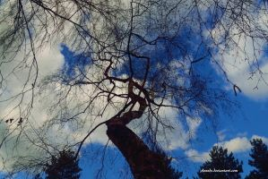 Hello old chap  Tree branch story by Aneede