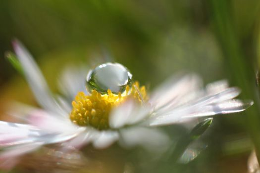 Droplet by IreneHorvath