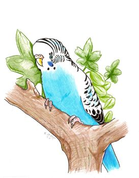 Budgie bird by G-manluver
