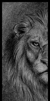 Lion - Doodle by Skia