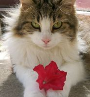The Cat and the Flower by Emasone