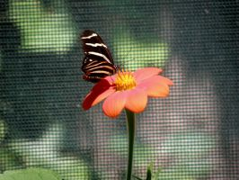 butterfly pic3 by Nipntuck3