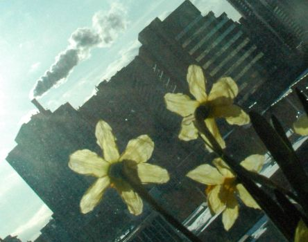 Flowers And City by economy