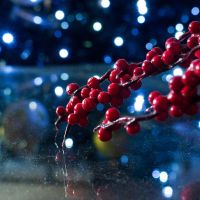 Berry Bokeh Christmas by ScENeYmE