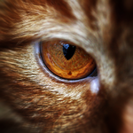 Eye of the Tiger by antoniakuhn