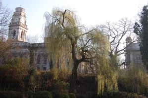 Trees and Buildings by Faceler