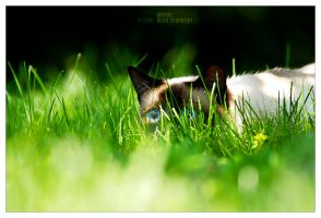 ... hidden by werol