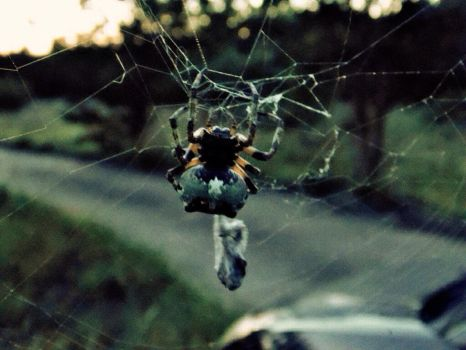Spider And Prey by TheGerm84