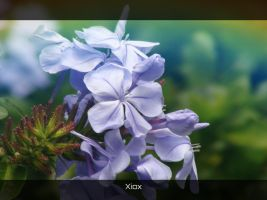 Purple Flowers by Xiox231