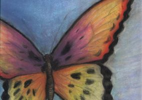 Butterfly by chinkabee