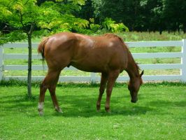 Berich Horse 3 - Cool by Freedom-Falling