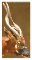 Antelope Close-Up_9307 by vamphawkehphotos
