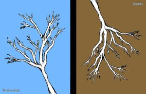 Branches or Roots? by strryeyedreamr27