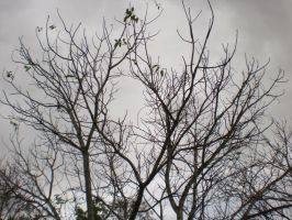 Bare Trees by bonzaboy