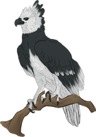 Harpy Eagle by mute-owl