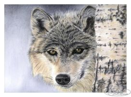 Le regard du loup by morvandelle
