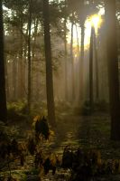 Woods at dawn 6 by steppeland