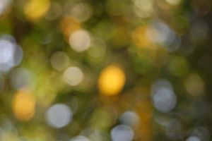 End of Summer Bokeh by LuizaLazar