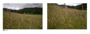 Bitych: Grass Landscapes by frotographer