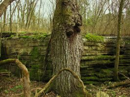 Tree Rock STock by iguanadongreenStock