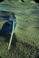 The frozen feather i found.... by CauterizeSetsFire
