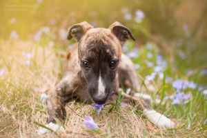 Baby Pixie by HiawathaPhoto