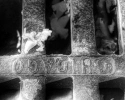 Flower on Sewer Grate: 2 by spudart