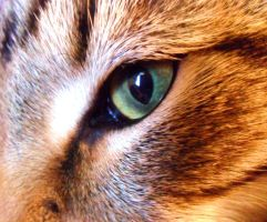 Eye of the Tiger Cat by SilverSoul1496
