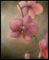 Moth Orchid by EdwardJPayton