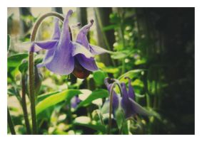 Weeping Flower by amyjls