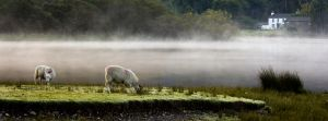 Sheep amongst the mist by AngiWallace