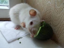 Happy Cucumber Rat by nikkeae