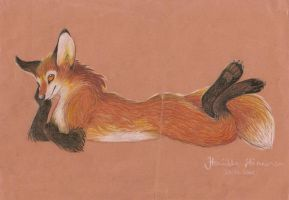 Vulpes Vulpes by CanisAlbus