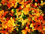 Fall Bouquet by DonnaMarie113
