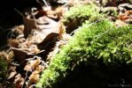 Moss Undergrowth by LiChiba