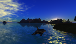 Orca Sunset by Monerda