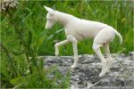 Nature bjd dog 05 by leo3dmodels