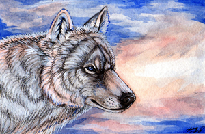 Arctic Wolf by MorRokko