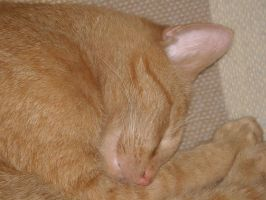 Sleeping Cat Stock 11 by Orangen-Stock