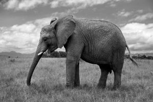 The Touch of the Elephant by WhiteBook