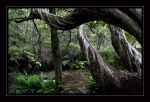 Enchanted forest...edit by mountain-troll