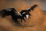 In the wind by Yewrezz