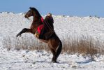High Rearing under Saddle by LuDa-Stock