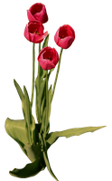 Tulips 01 by lonermade