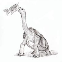 The Giraffe-necked Tortoise by Eurwentala