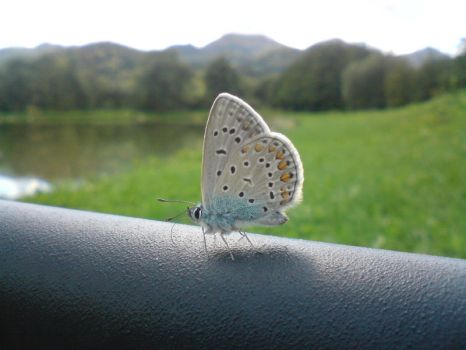 Butterfly by lapared