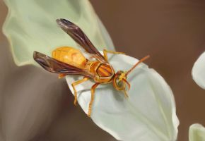 paper wasp by pencil206