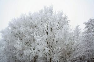 winterland tree tops 2 by priesteres-stock